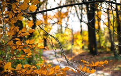 jak dbać o skórę jesienią?