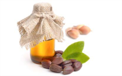 olej jojoba - właściwości i zastosowanie w kosmetyce - sanaja