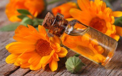 olej z nagietka lekarskiego - właściwości i zastosowanie w kosmetyce - sanaja