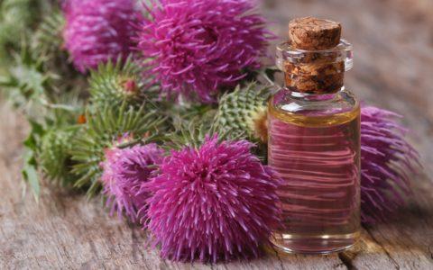 olej z ostropestu plamistego - właściwości i zastosowanie - sanaja