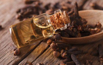 olejek goździkowy - właściwości i zastosowanie w kosmetyce - sanaja