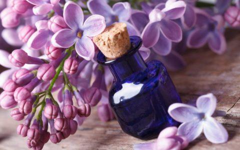 olejek z lilaka pospolitego - właściwości i zastosowanie w kosmetyce - sanaja